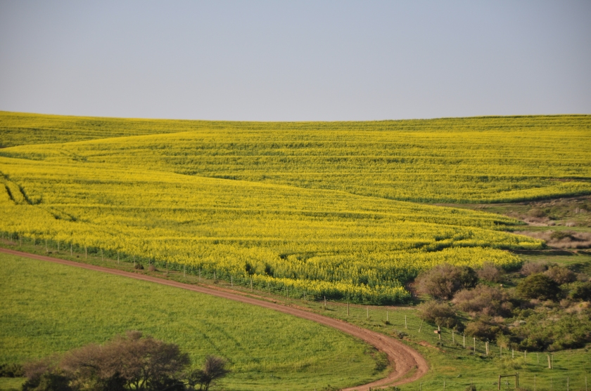 S Africa, road along gold field