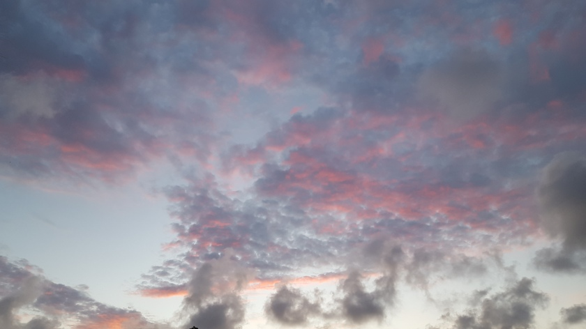 Sunrise surprise, pink on grey