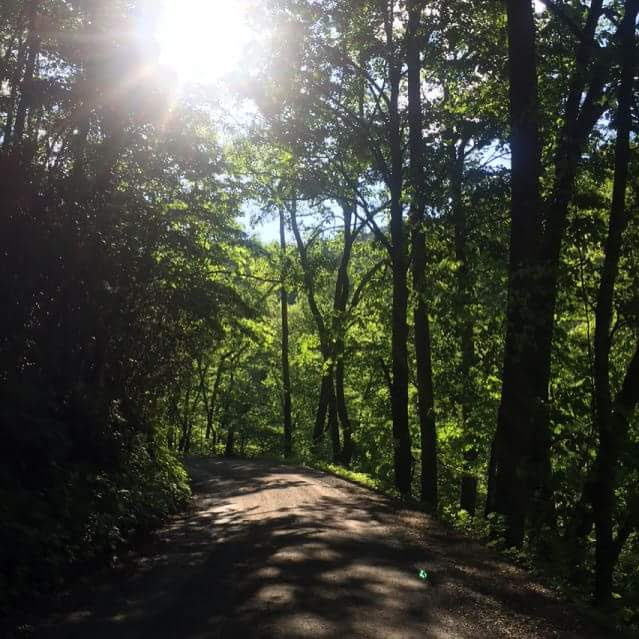 Road in woods with sunlighto