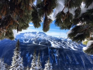Whistler, Canada, snowy mts beyond trees