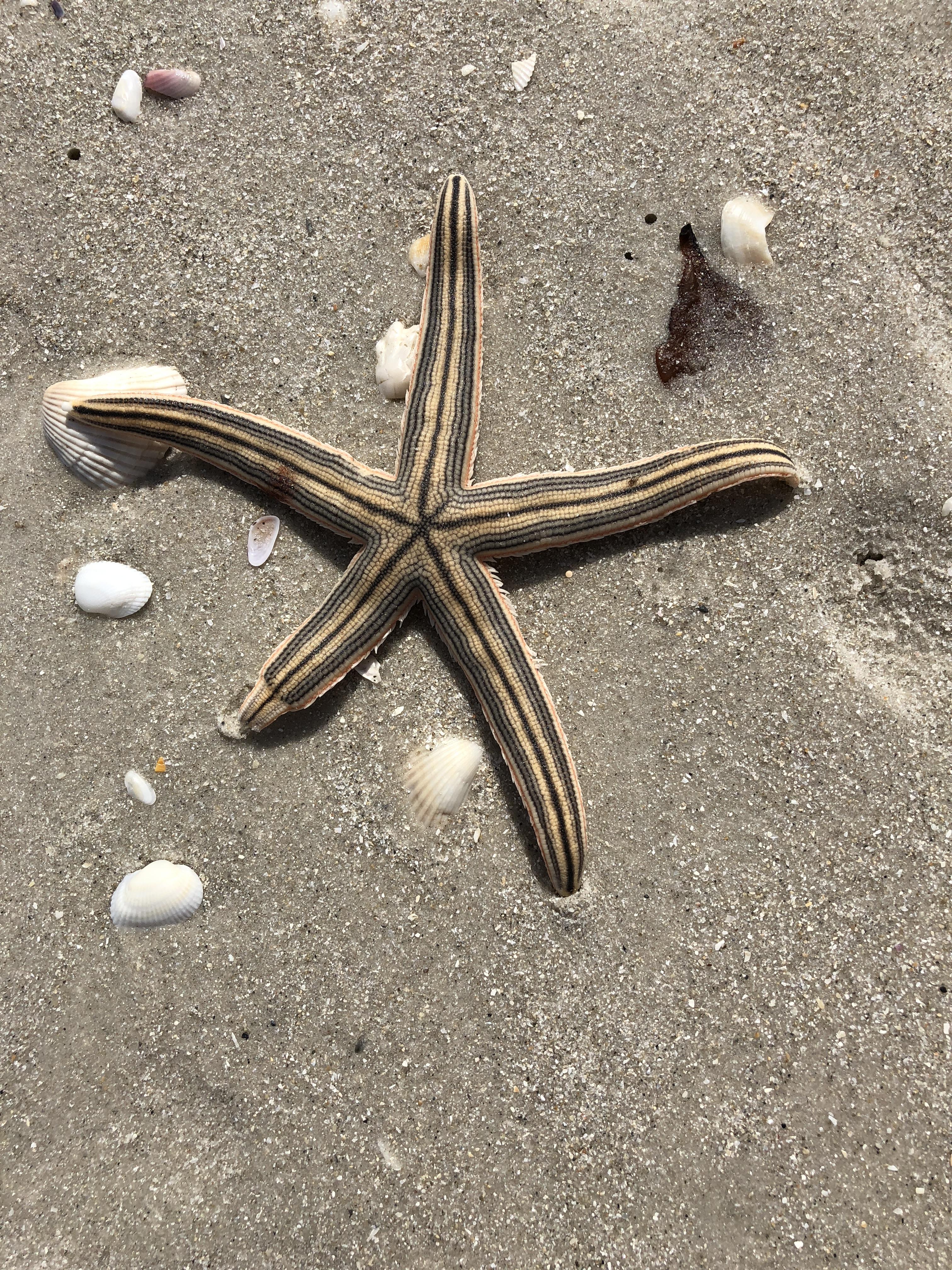 Starfish w regenerating leg.JPG