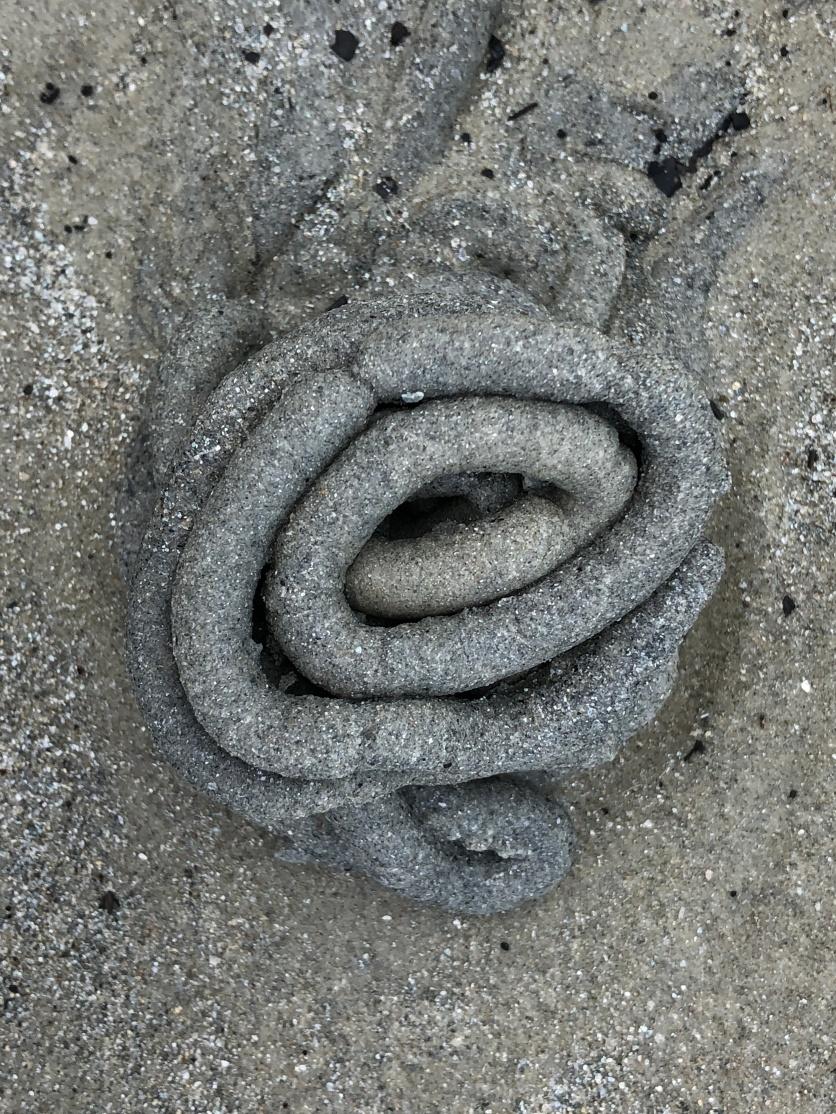 Sand rose, NZ coast