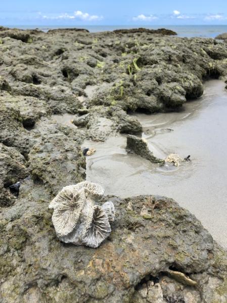 Coral at Queensland beach, Australia 2