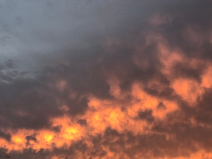 November dawn 1