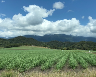 Queensland, Australia, sugar cane
