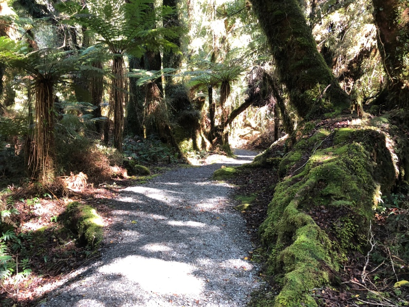 Pathway 2, rain forest, W Coast NZ