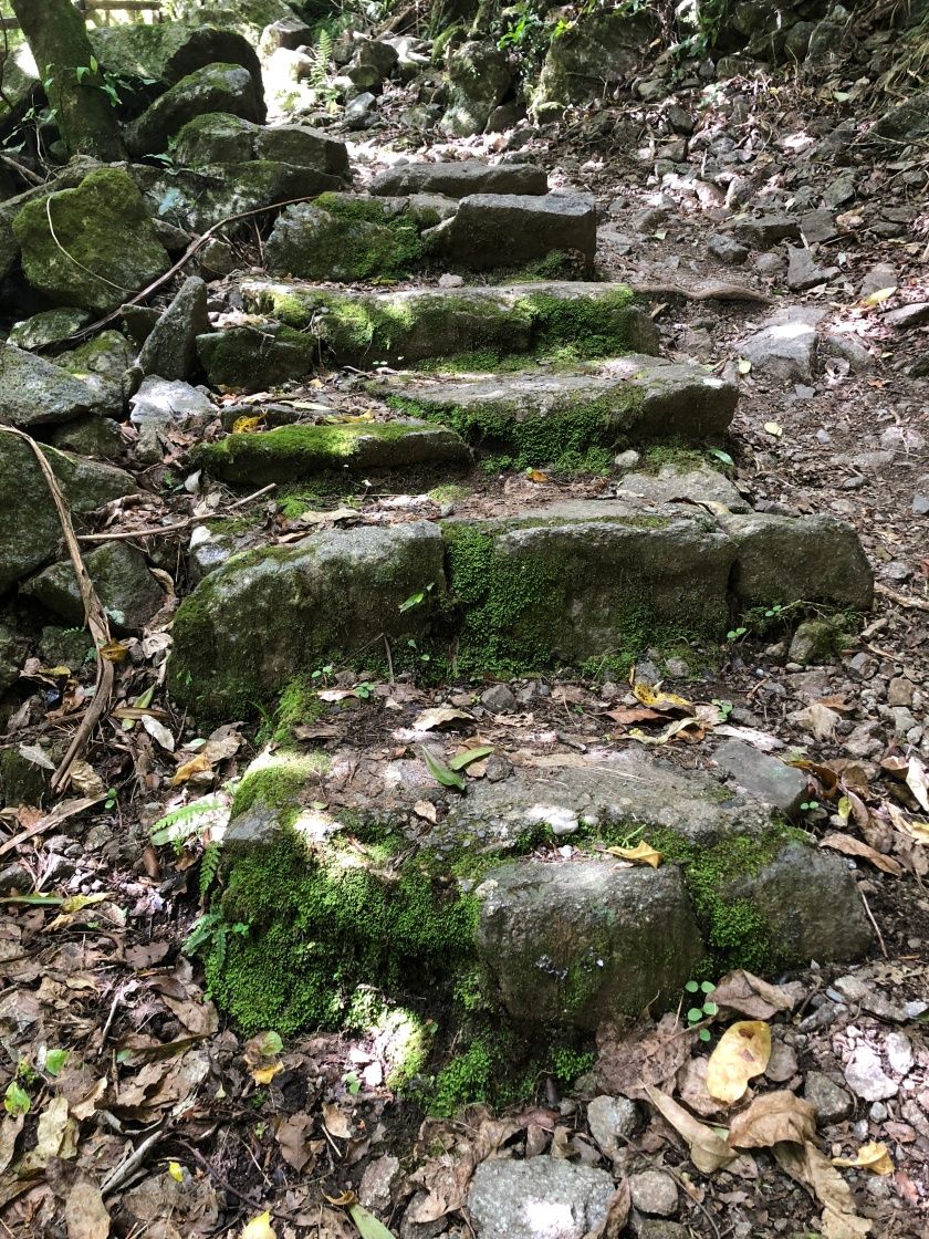 path up mossy steps, nz