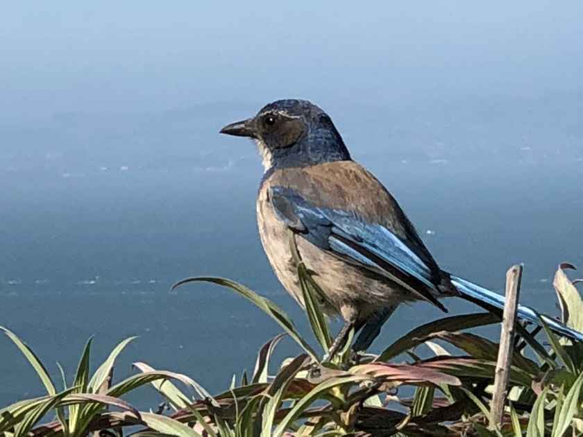 Bird w blue, San Francisco Bay