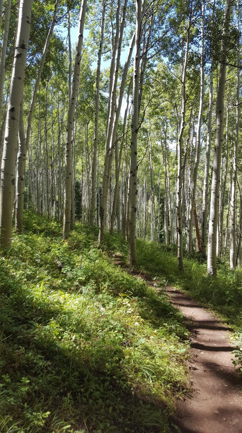 Path in Aspen forest, Beaver Creek, CO vertical