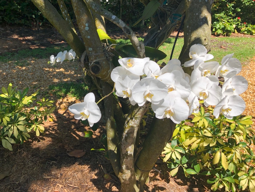 Orchids in tree