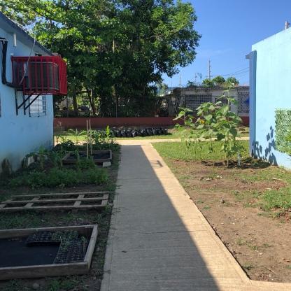 School Garden, Puerto Rico
