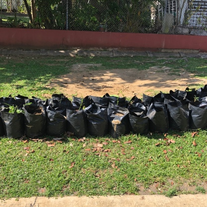 School trash bags w seedlings, Minillas, Puerto Rico