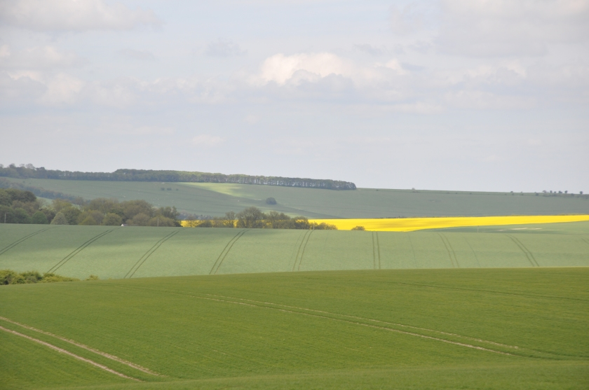 S Africa soft green, yellow fields w lines